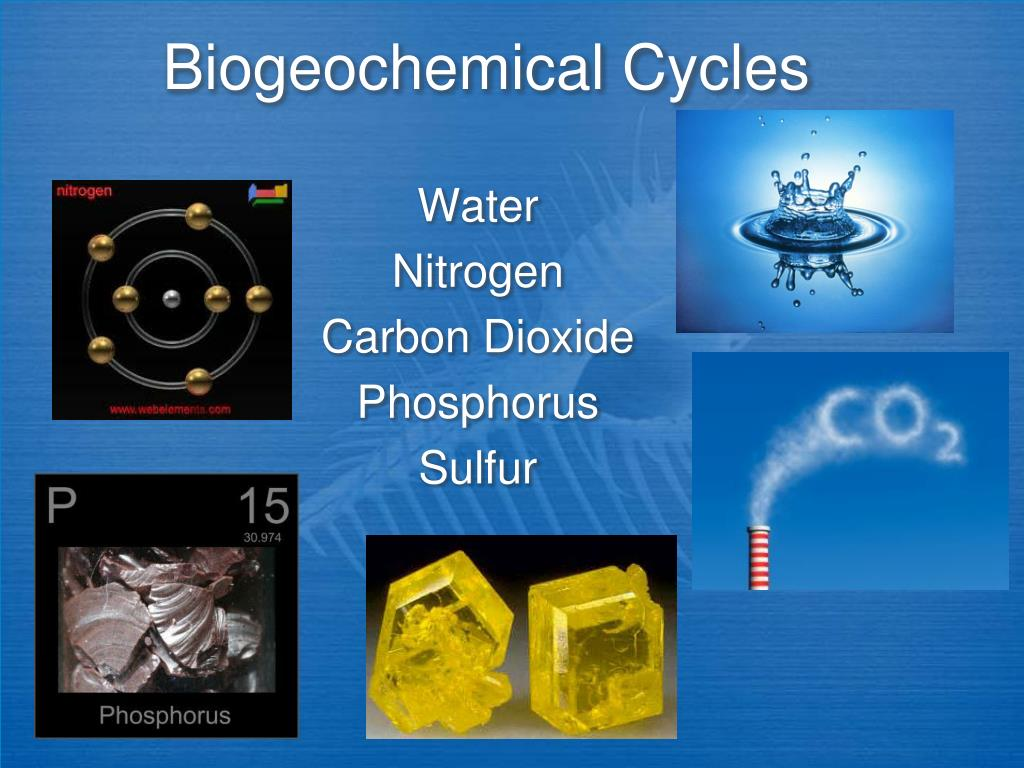 biogeochemical cycles l.
