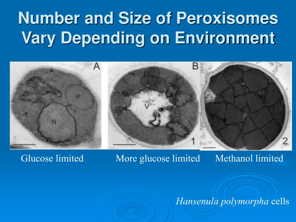 Number and Size of Peroxisomes Vary Depending on Environment