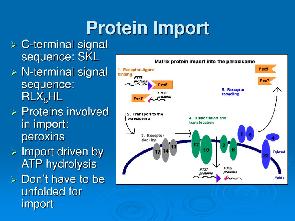 Protein Import