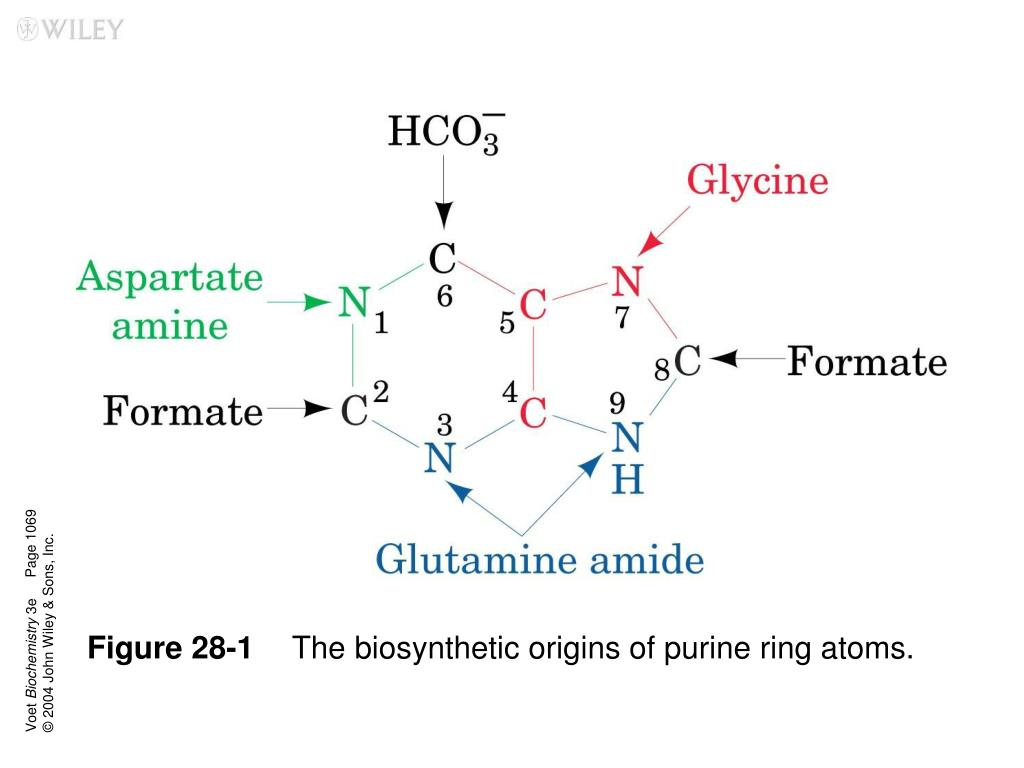 figure 28 1 the biosynthetic origins of purine ring atoms l.