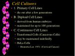 cell cultures