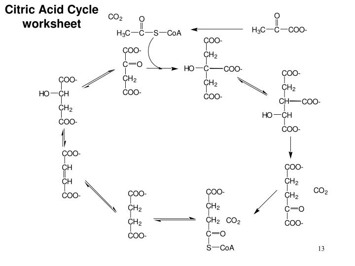 Ppt Ch 16 Citric Acid Cycle Powerpoint Presentation Id217289