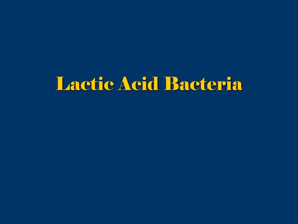 lactic acid bacteria l.
