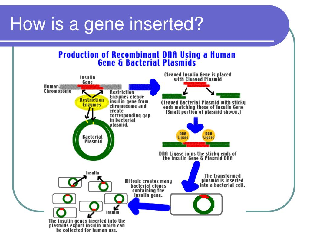 How is a gene inserted?