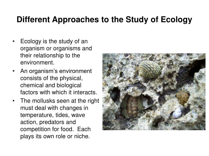 Different approaches to the study of ecology