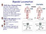 bipedal locomotion