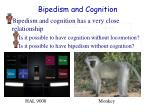 bipedism and cognition