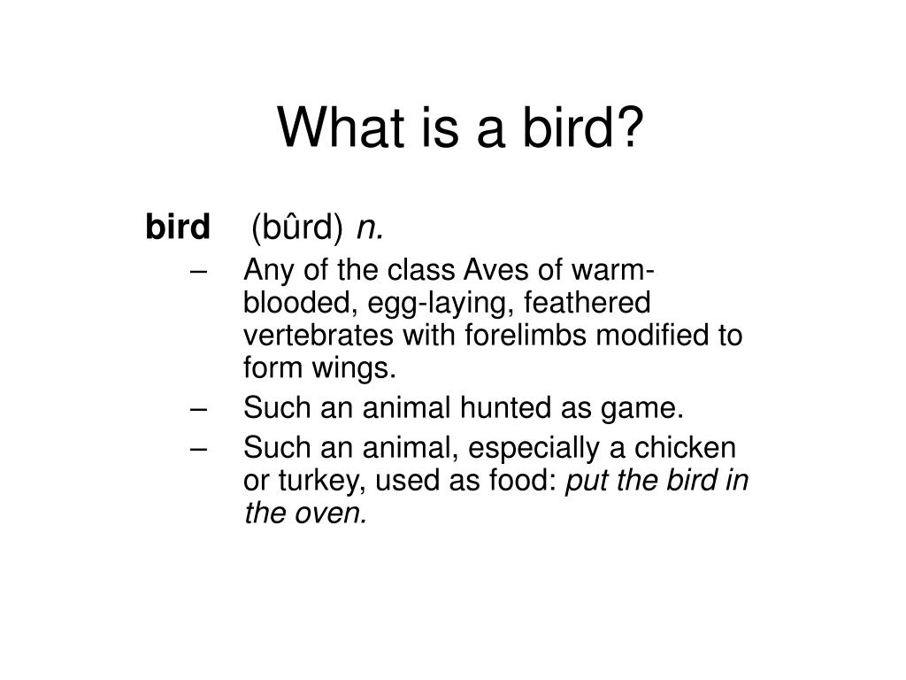 what is a bird l.