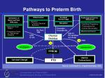 pathways to preterm birth45