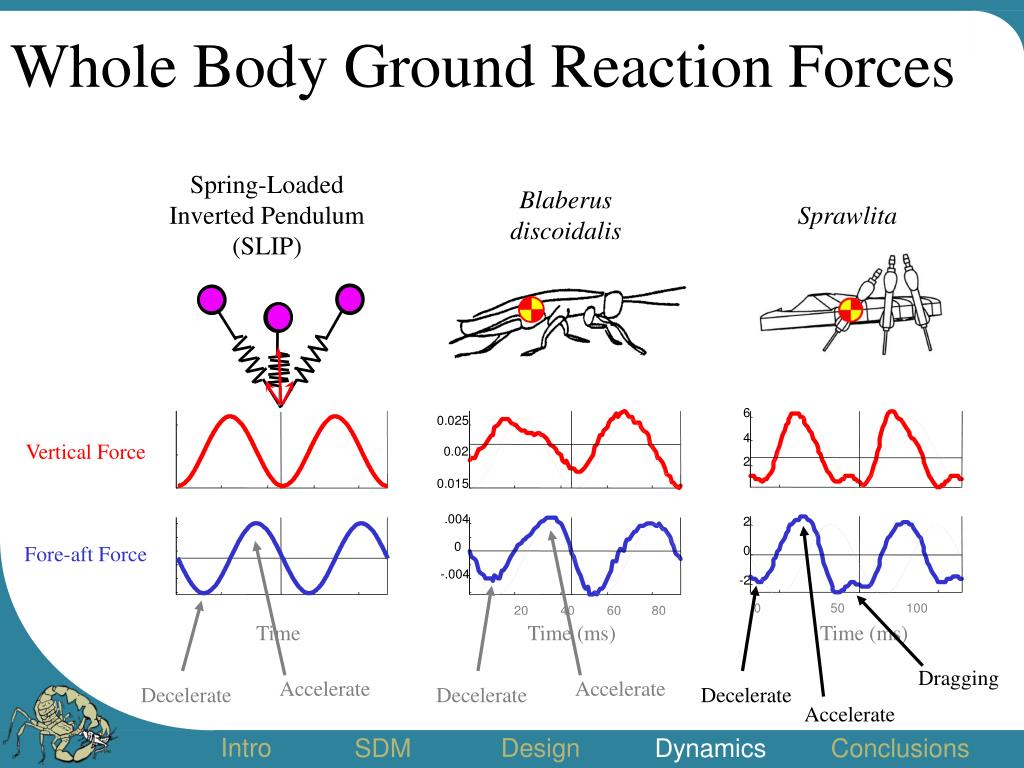 Whole Body Ground Reaction Forces