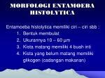 morfologi entamoeba histolytica