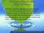 membran plasma atau plasmalemma