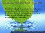 membran vakuola atau tonoplas