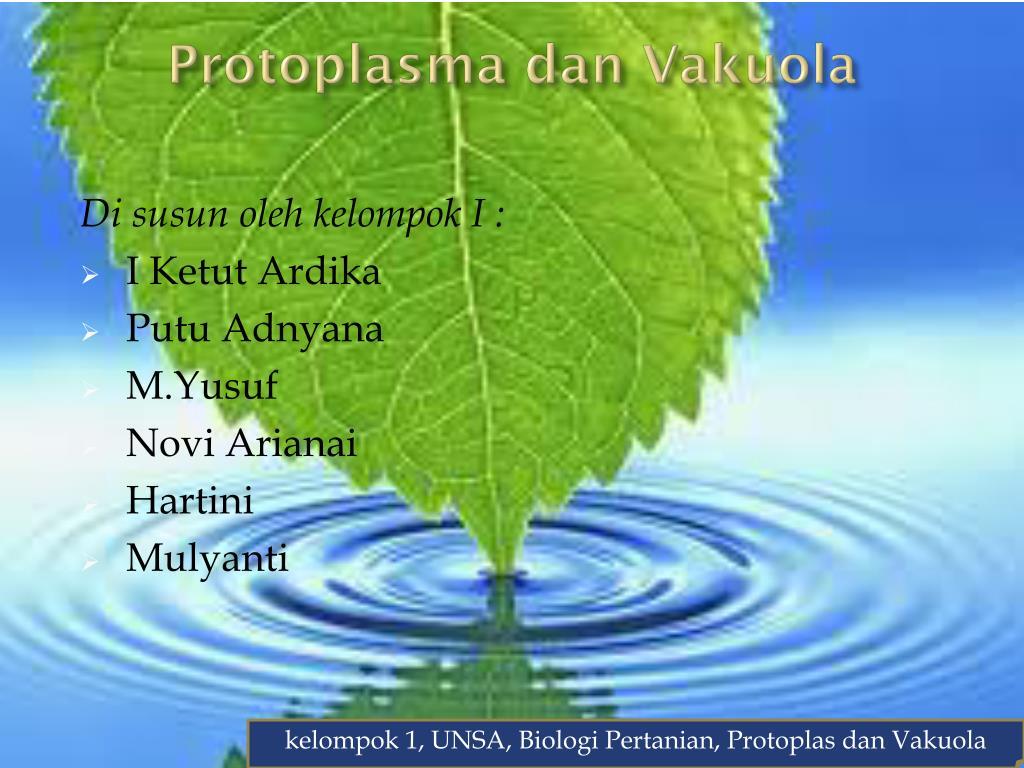 protoplasma dan vakuola l.