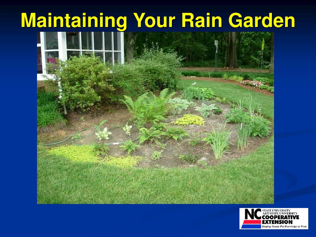 maintaining your rain garden l.