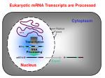 eukaryotic mrna transcripts are processed