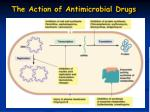 the action of antimicrobial drugs