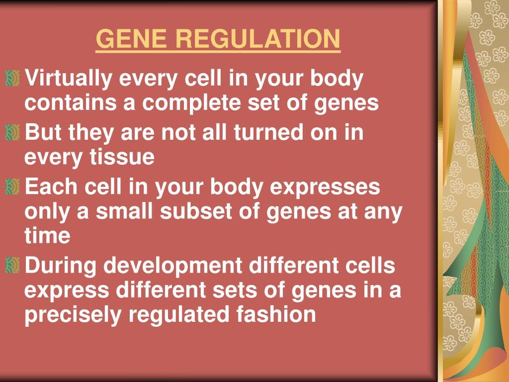 gene regulation l.