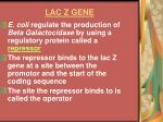 lac z gene14