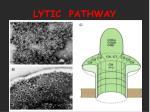 lytic pathway30