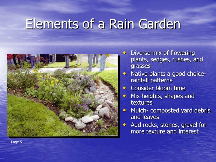 Elements of a rain garden