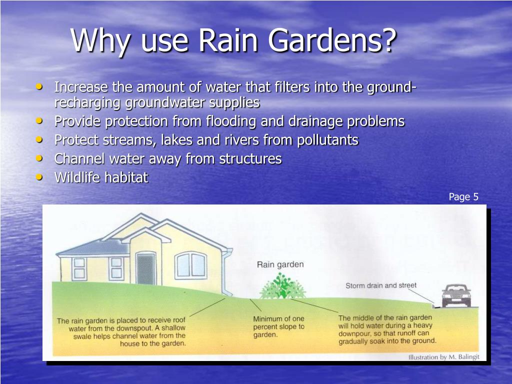 Why use Rain Gardens?