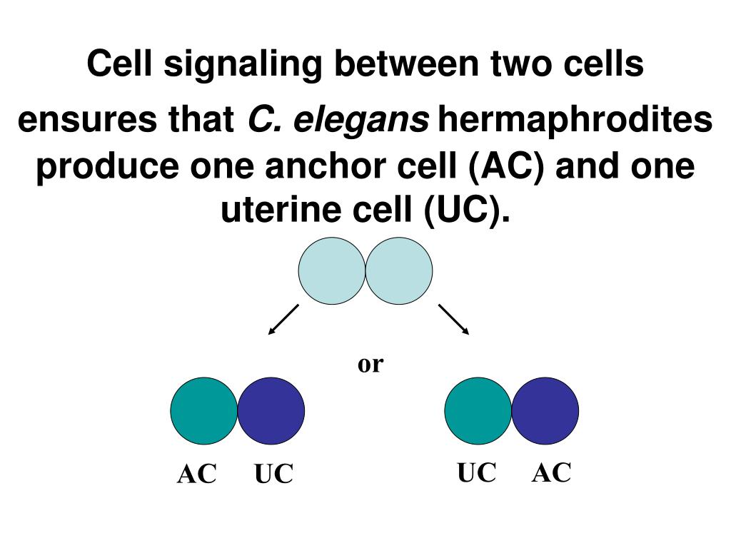 Cell signaling between two cells ensures that