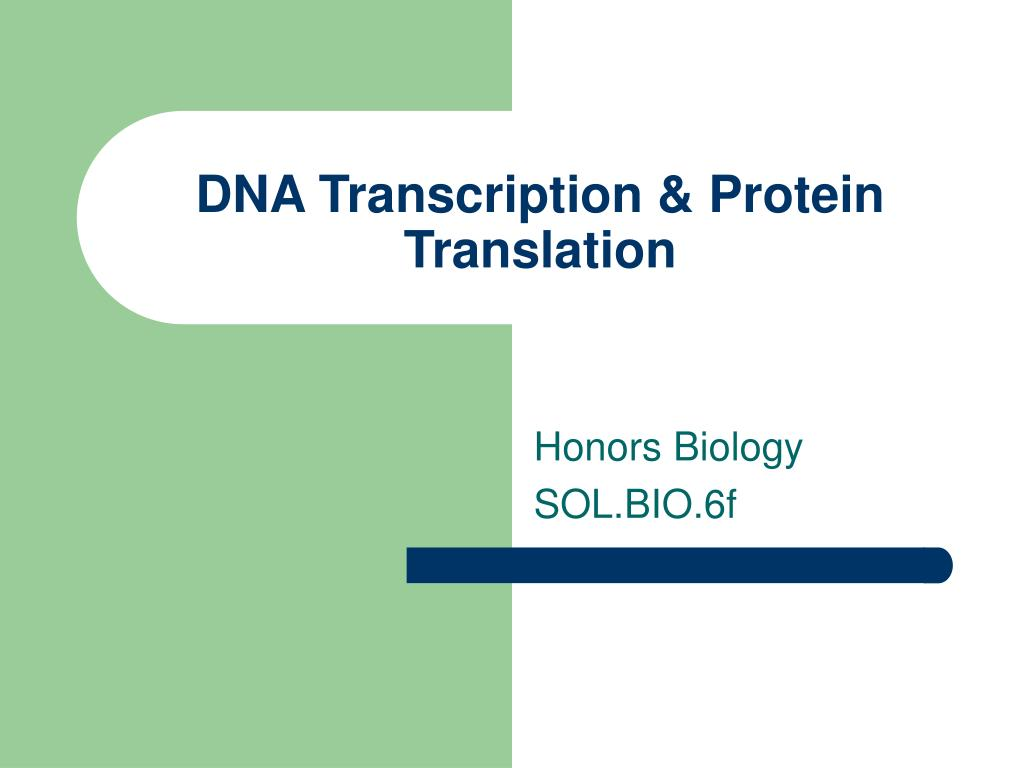 dna transcription protein translation l.
