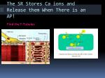 the sr stores ca ions and release them when there is an ap