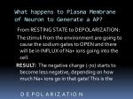 what happens to plasma membrane of neuron to generate a ap