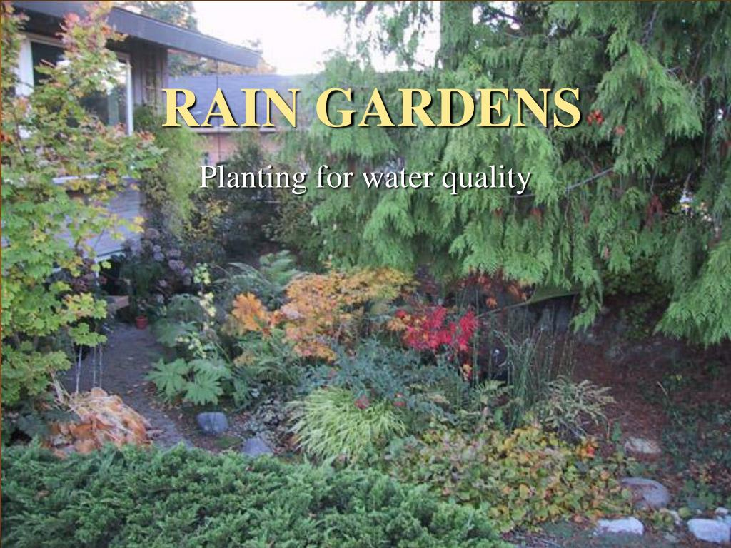rain gardens l.