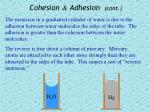 cohesion adhesion cont