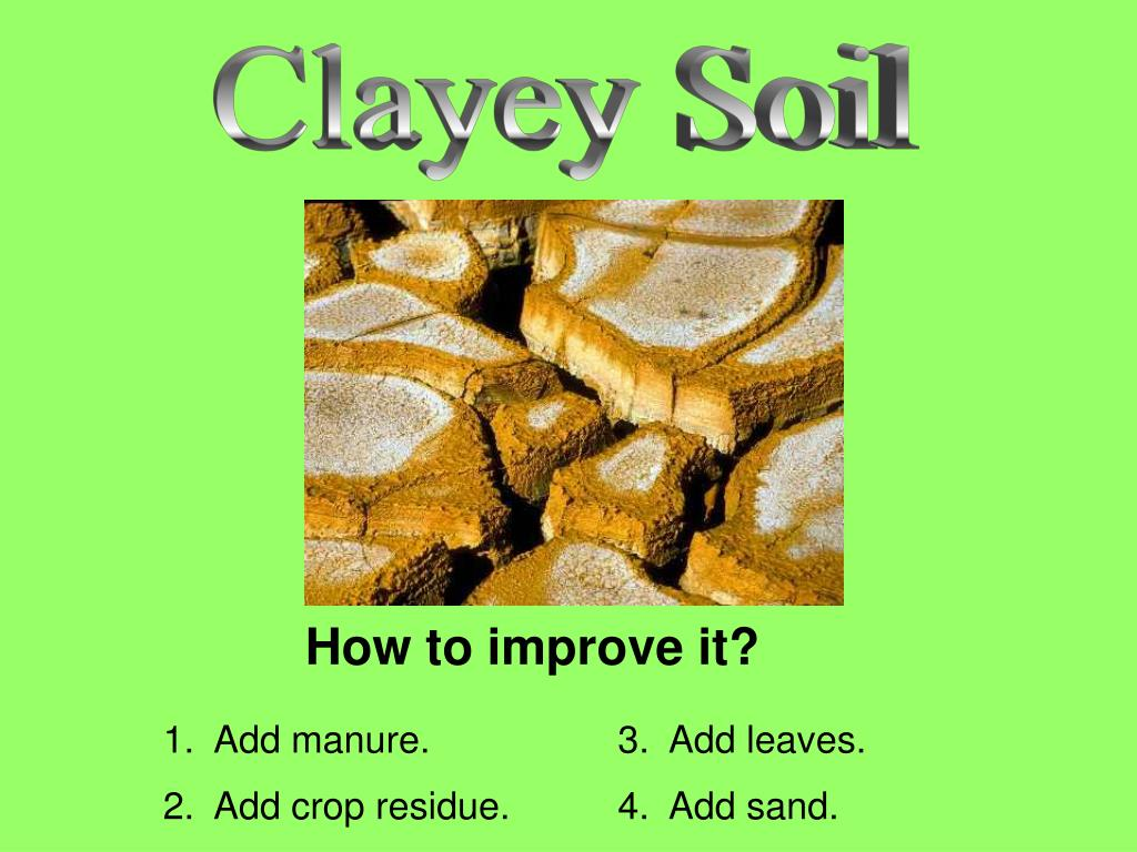 Clayey Soil