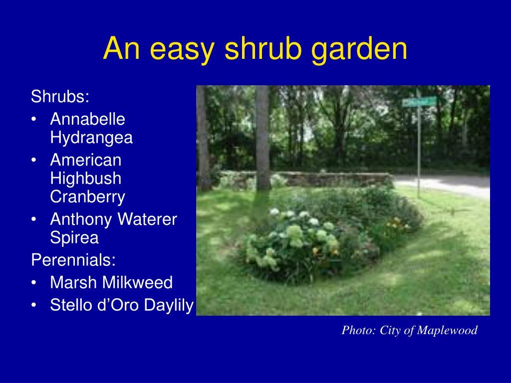 An easy shrub garden