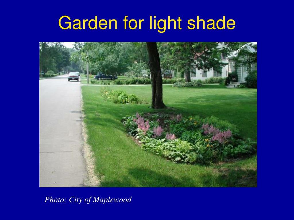 Garden for light shade