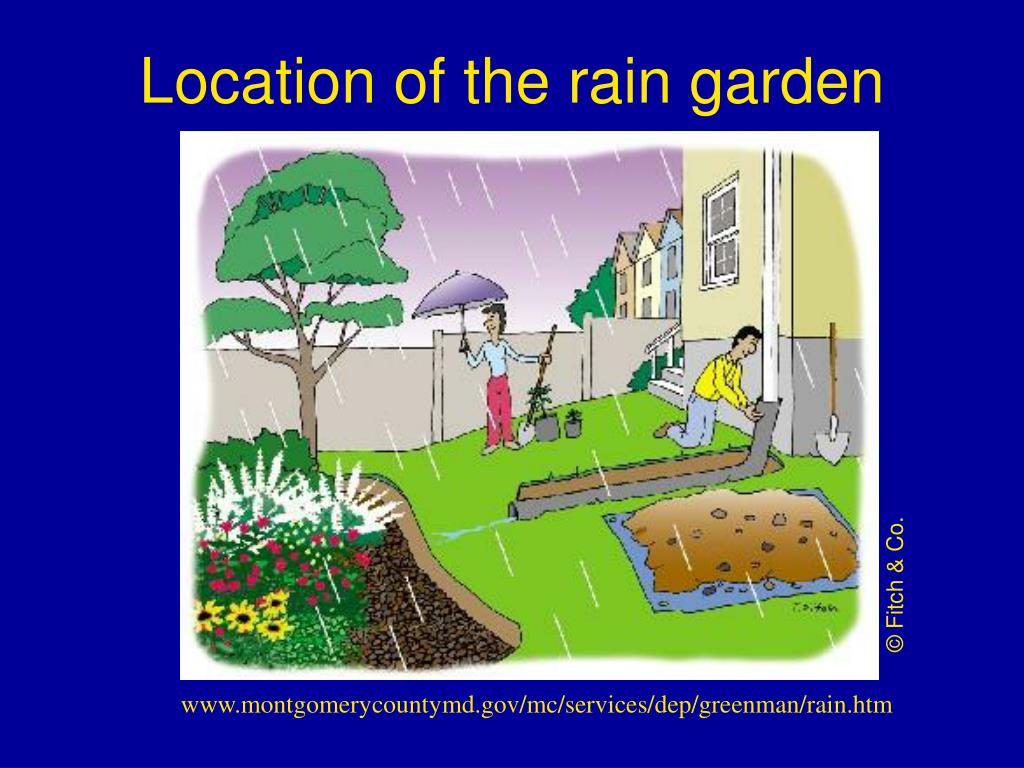 Location of the rain garden