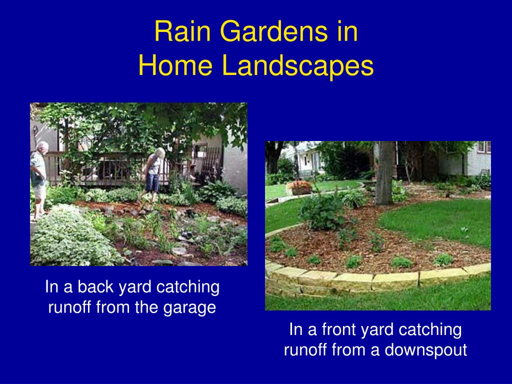 Rain Gardens in
