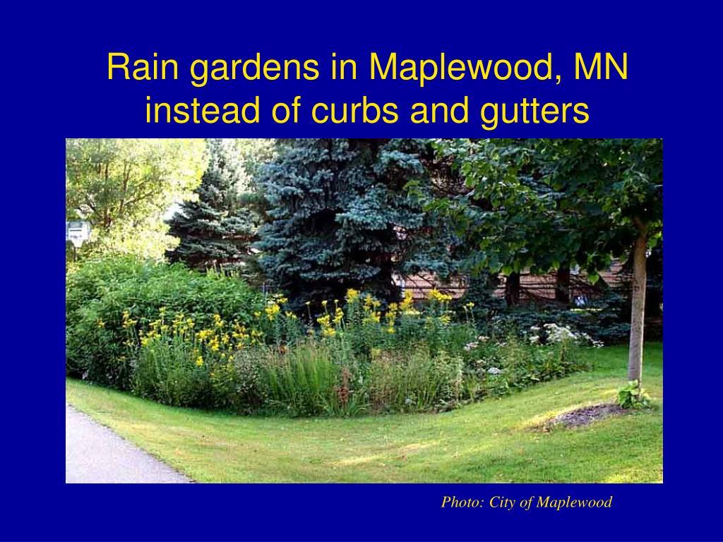 Rain gardens in Maplewood, MN