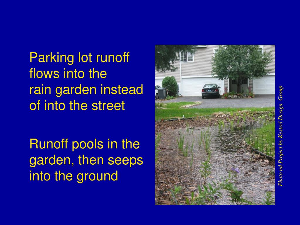 Parking lot runoff flows into the