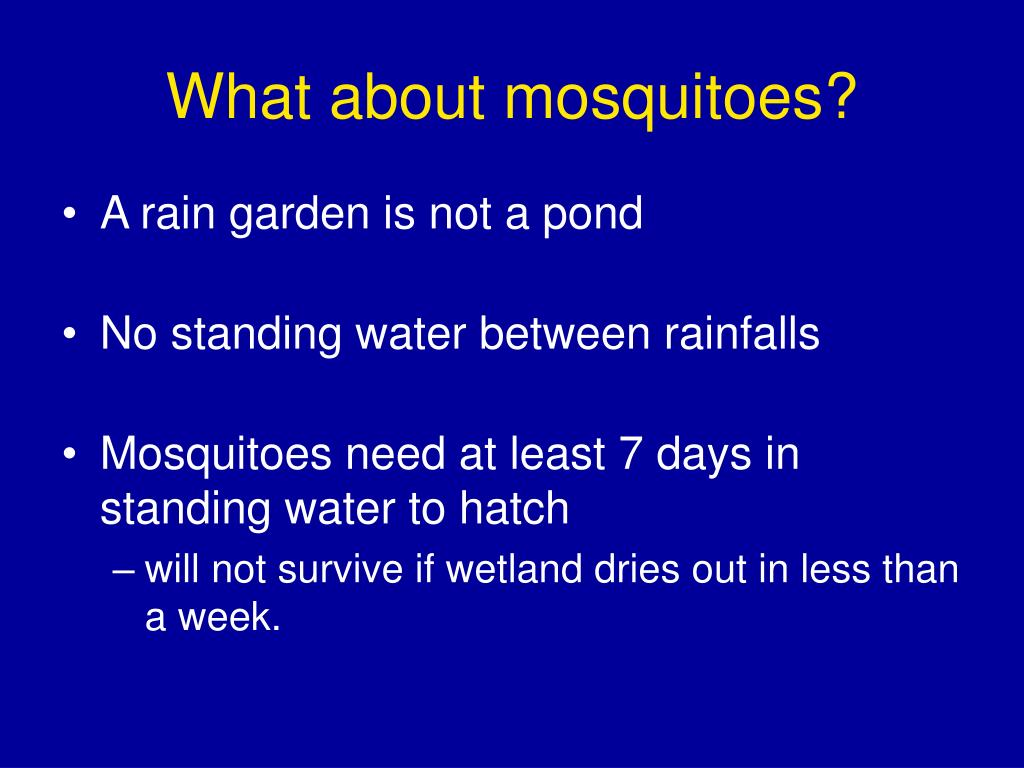What about mosquitoes?