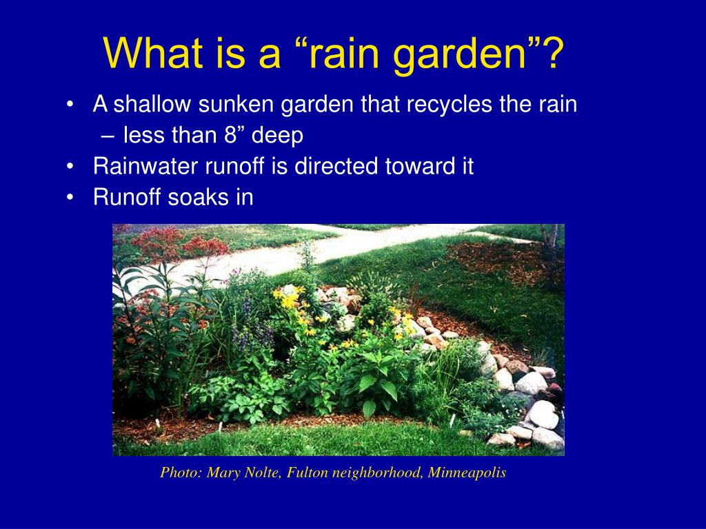 "What is a ""rain garden""?"
