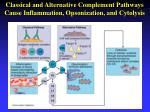 classical and alternative complement pathways cause inflammation opsonization and cytolysis