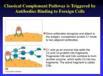 classical complement pathway is triggered by antibodies binding to foreign cells
