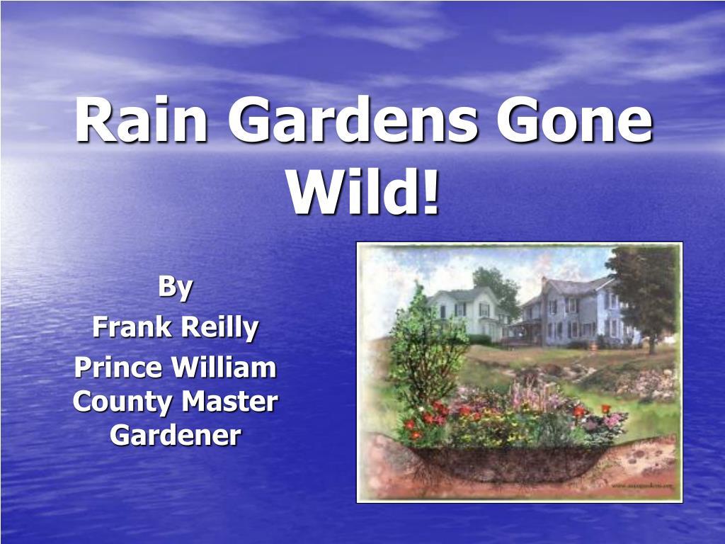 rain gardens gone wild