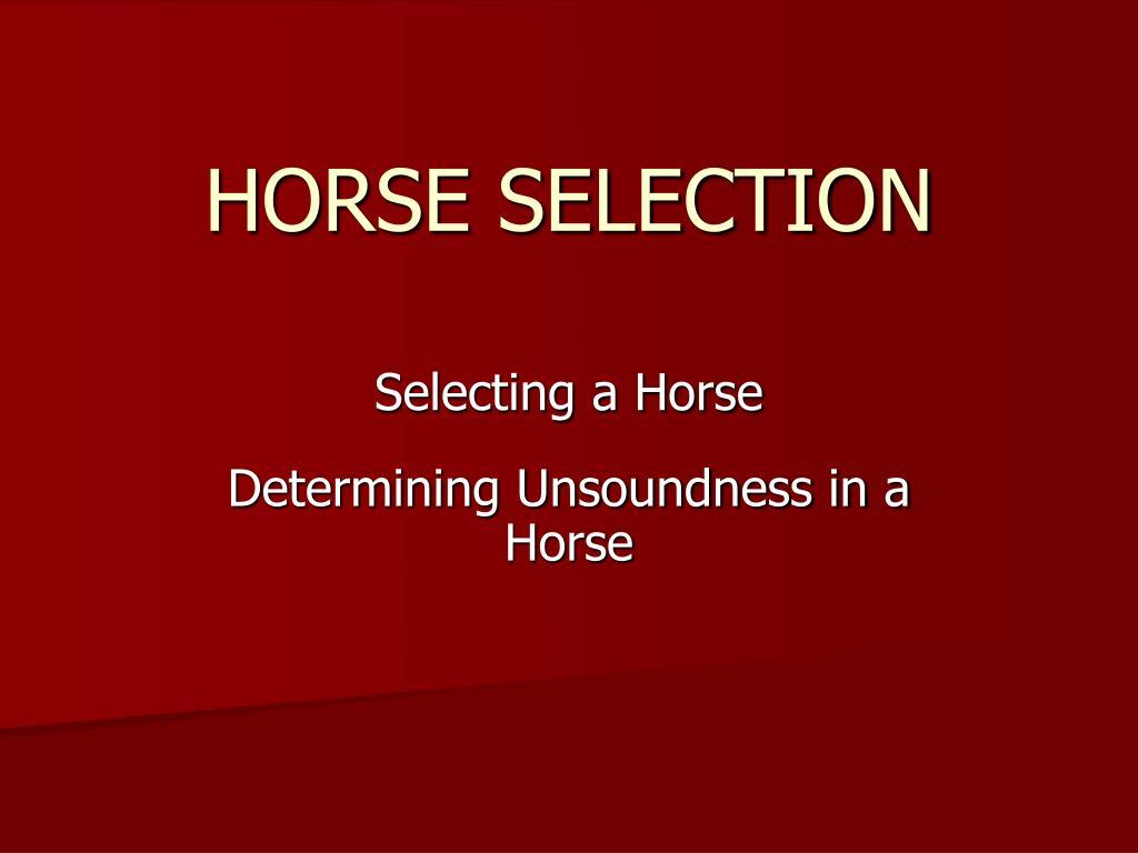horse selection l.