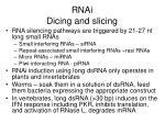 rnai dicing and slicing