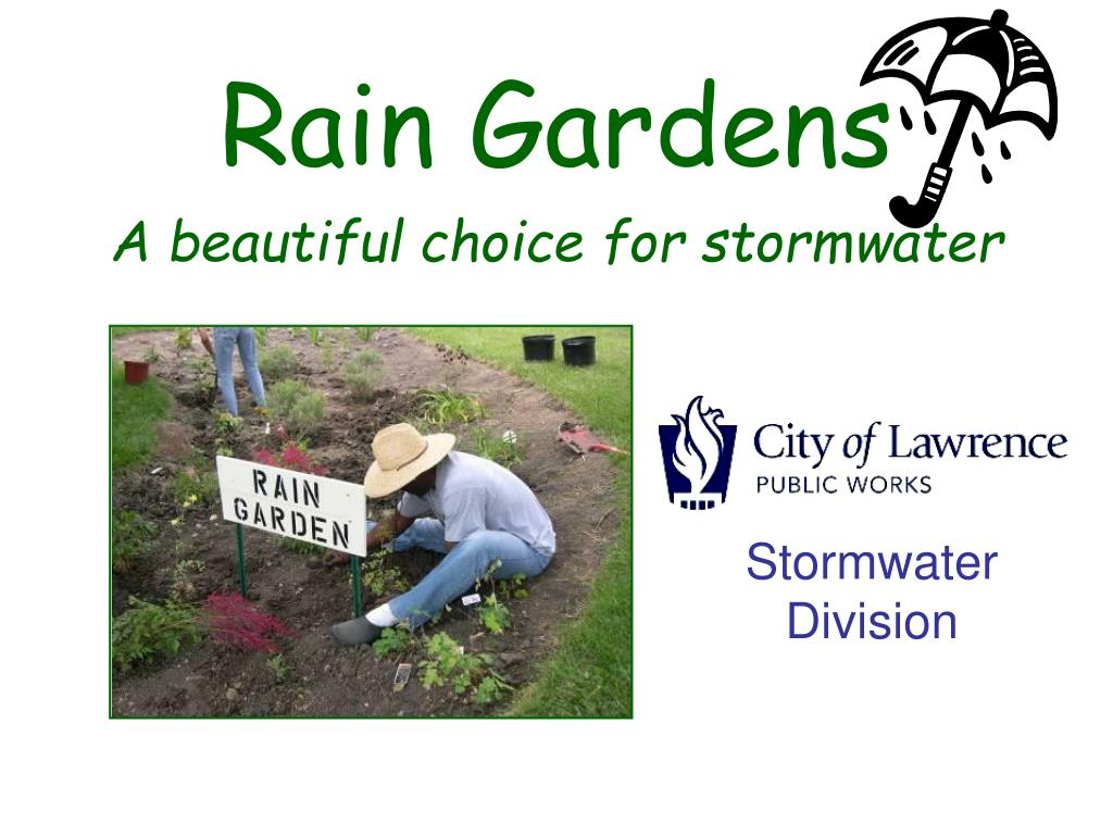 rain gardens a beautiful choice for stormwater l.