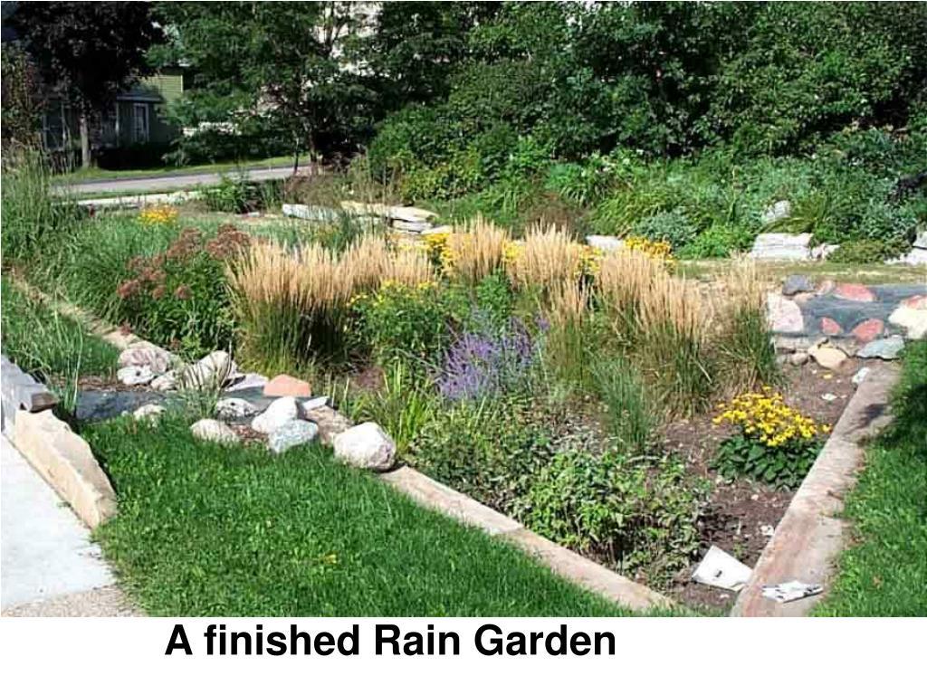 A finished Rain Garden