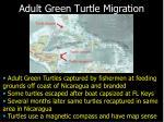 adult green turtle migration