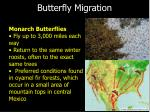 butterfly migration
